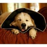All Four Paws Hundekragen Comfy Cone XS 11 cm Schwarz