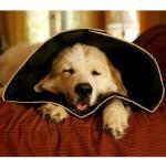 All Four Paws Hundekragen Comfy Cone XXL 37,5 cm Schwarz
