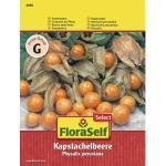 Andenbeere 'Kapstachelbeere' FloraSelf Select Gemüsesamen