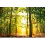 Architects Paper Fototapete Hidden in Plain, Herbst Wald, Vlies, glatt gelb Fototapeten Tapeten Bauen Renovieren