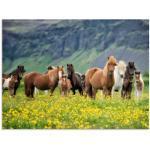 Grüne Moderne Artland Pferde Bilder mit Pferdemotiv poliert