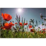Artland Wandbild »Mohnblumenwiese«, Blumenwiese (1 Stück), in vielen Größen & Produktarten - Alubild / Outdoorbild für den Außenbereich, Leinwandbild, Poster