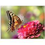 Grüne Moderne Artland Schmetterlinge Bilder mit Schmetterlingsmotiv