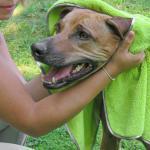 awiwa Hundehandtuch Pet Towel 90 x 60 cm