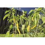 Bambusstab Splittstab FloraSelf H 30 cm Ø 4 mm braun