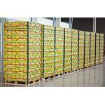 Bananen Standard 18 kg Karton SUPERPREIS