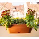 Blumenkasten Whitney aus Kunststoff