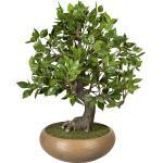 Bonsai Ficus PU-Stamm, Keramikschale 240 x 90 mm Höhe 500 mm