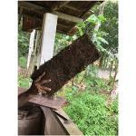 catappa-leaves XAXIM Dekopanel 50x20x3 cm für Terrarien Aquarien - frisch aus dem Regenwald - grob