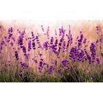 Lavendelfarbene decomonkey Vliestapeten