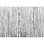decomonkey Fototapete selbstklebend Wald 98x70 cm Selbstklebende Tapeten Wand Fototapeten Tapete Wandtapete klebend Klebefolie Baum