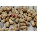 Erdnüsse mit Schalen 800 gramm Beutel