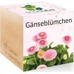 "Feel Green ecocube ""Gänseblümchen"" - 1 Stk"