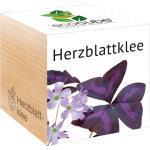 "Feel Green ecocube ""Herzblattklee"" - 1 Stk."