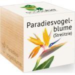 "Feel Green ecocube ""Paradiesvogelblume"" - 1 Stk."