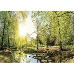 Tannengrüne Landschafts-Fototapeten