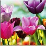 Glasbild Tulips II 4 mm Floatglas mit Motiv - ca. 30 x 30 cm