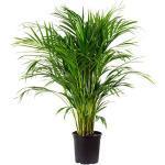 Reduzierte Zimmerpflanzen & Grünpflanzen