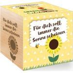 "Green Celebrations ""Sonnenblume"" - 1 Stk."