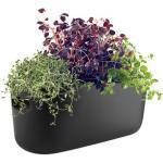 Herb Blumentopf mit Wasserreservoir / Kräuter-Pflanztopf - Keramik - Eva Solo - Schwarz