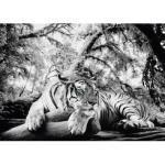 Home affaire Deco-Panel Tiger guckt dich an grau Wandbilder XXL Bilder Bilderrahmen Wohnaccessoires