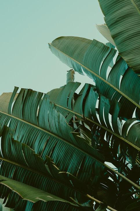 Palmen Print