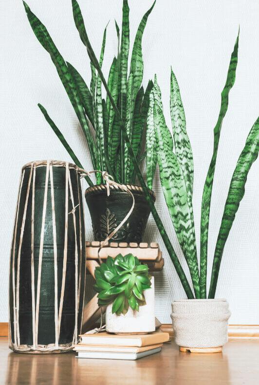 Bogenhanf und grüne Zimmerpflanze im Topf