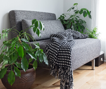 Graue Couch mit Decke und Pflanzen