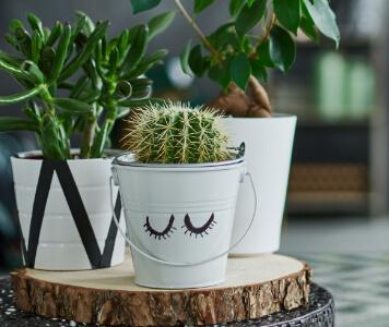 Zimmerpflanzen in Töpfen auf Holzscheibe