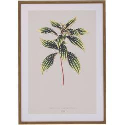 IMPRESSIONEN living Bild, Pflanze grau/grün/braun