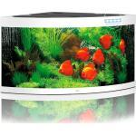 Juwel Trigon 350 LED Aquarium - weiß