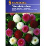 "Kiepenkerl Gänseblümchen ""Gefüllte Mischung"" - 1 Pkg"
