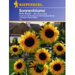 Kiepenkerl Sonnenblume Hohe Riesen