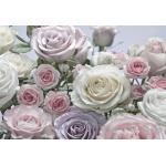 Komar FOTOTAPETE, Beige, Rosa, Papier, Rose, 368x254 cm