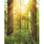 Komar VLIESTAPETE , Bäume , 200x250 cm , FSC MIX , Tapeten Shop, Tapeten