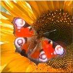LED-Bild Schmetterling Wand Dekoration Bild Licht Leuchtbild Leinwand Wandbild warmweiß Eglo 75037