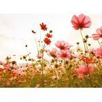living walls Fototapete »Designwalls Flower Meadow 1«, glatt, (5 St)