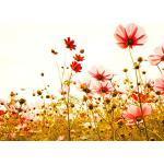 Livingwalls Fototapete Designwalls Vliestapete Flower Meadow Tapete mit Blumen in Braun, Gelb, Grün, Rosa, Rot, Schwarz, Weiß 350 x 255 cm XXL Wandtapete Wandbild 118600
