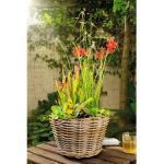 Miniteich FloraSelf mit versch.Teichpflanzen Ø 32 cm Ratankorb