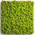 Mocadu Wandpaneel »Mooswand & Moosbild Basic Rentier-/Islandmoos«, 1-tlg., H 50 x 50 x 5 cm, grün, 1 St.