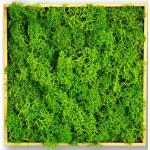 Moosly® Moossymbol - Quadrat Selbstklebend Made in Germany Moosbild Wandbild Moos Deko Holzsymbol Wandtattoo Wanddeko   Ca. 12 X 6 cm