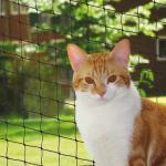 Nobby Katzenschutznetz schwarz, Größe: L-XL
