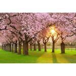 papermoon Vlies- Fototapete Digitaldruck 350 x 260 cm, Cherry Tree Garden (GLO769559101)