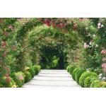 papermoon Vlies- Fototapete Digitaldruck 350 x 260 cm, Rose Arch Garden (GLO769559090)
