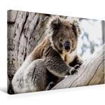 Premium Textil-Leinwand 45 cm x 30 cm quer Koala im [4059478190986] Australien - einfach tierisch gut