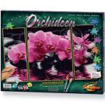 SCHIPPER 609260603 MNZ - Malen nach Zahlen Orchideen