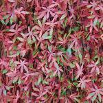 Tenax Künstliche Hecke mit Blättern, ausziehbar, aus Weide, 3D Divy X-Tens Red Acer, 1 x 2 m, rot/grün