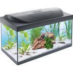 Tetra Regular Starter Line Aquarium-Komplettset mit LED-Beleuchtung stabiles 54 Liter Einsteigerbecken mit Technik, Regular Starterline, Futter und Pflegemitteln