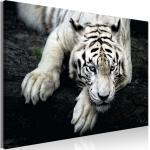 Tiere LEINWAND BILD Wandbild XXL Kunstdruck Wohnzimmer 5Motive Jaguar Tiger Löwe