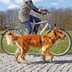 Trixie - Fahrrad- und Joggingleine, Handfreie Leine 1 - 2 m, 25 mm, schwarz